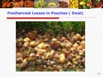 postharvest losses in peaches swat
