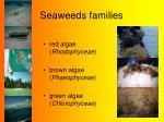 seaweeds families