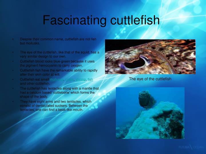 Fascinating cuttlefish