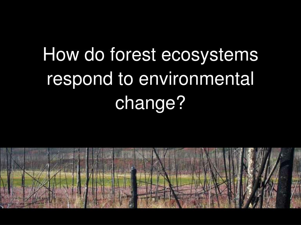 how do forest ecosystems respond to environmental change l.