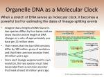 organelle dna as a molecular clock