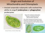 origin and evolution of mitochondria and chloroplasts
