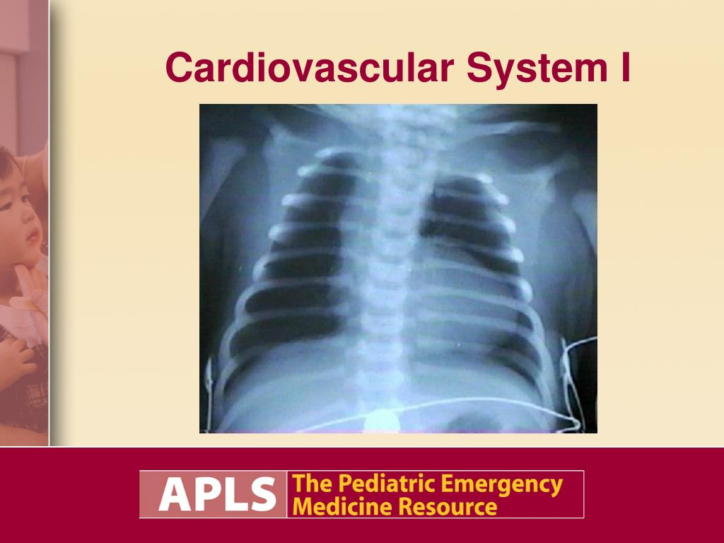 cardiovascular system i l.
