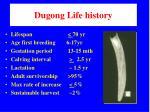dugong life history