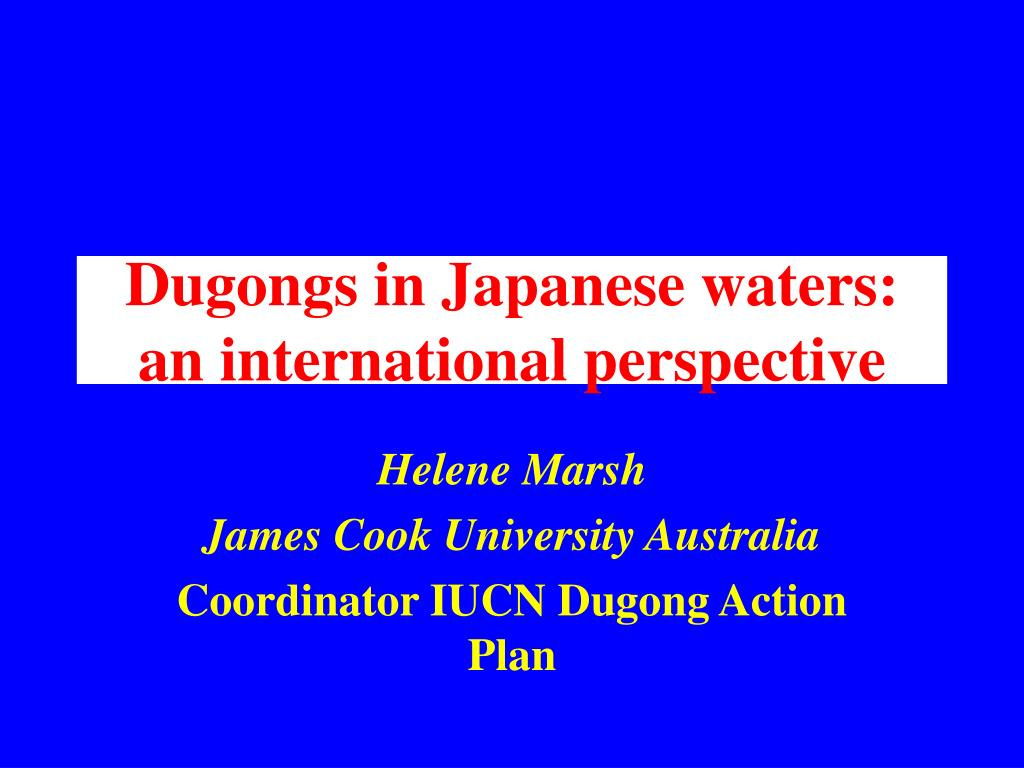 dugongs in japanese waters an international perspective l.