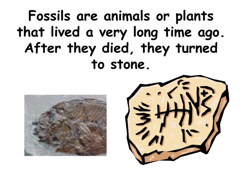 download microfacies of carbonate rocks: