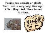 fossils are animals or plants that lived a very long time ago after they died they turned to stone