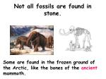 not all fossils are found in stone