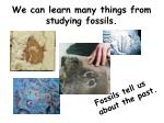 we can learn many things from studying fossils