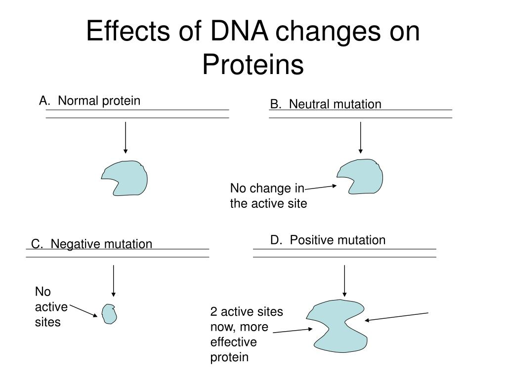 Effects of DNA changes on Proteins
