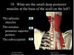 19 what are the small deep posterior muscles at the base of the scull on the left