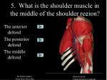 5 what is the shoulder muscle in the middle of the shoulder region