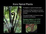 koru spiral plants2