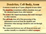 dendrites cell body axon