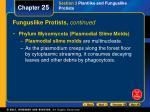 funguslike protists continued