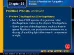 plantlike protists continued29