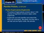 plantlike protists continued31