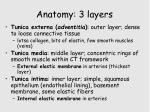 anatomy 3 layers
