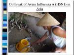 outbreak of avian influenza a h5n1 in asia