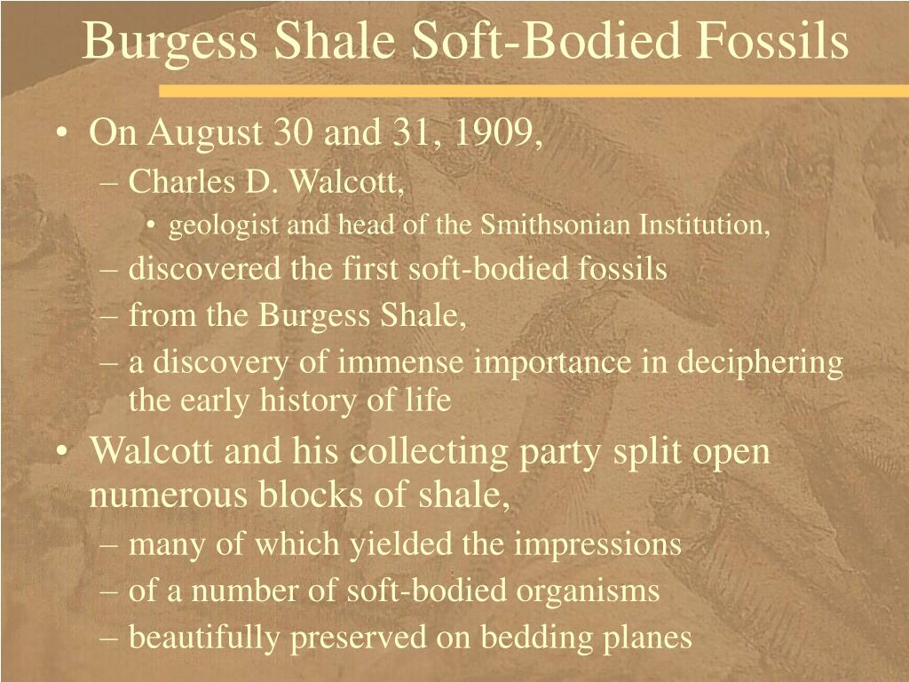 Burgess Shale Soft-Bodied Fossils