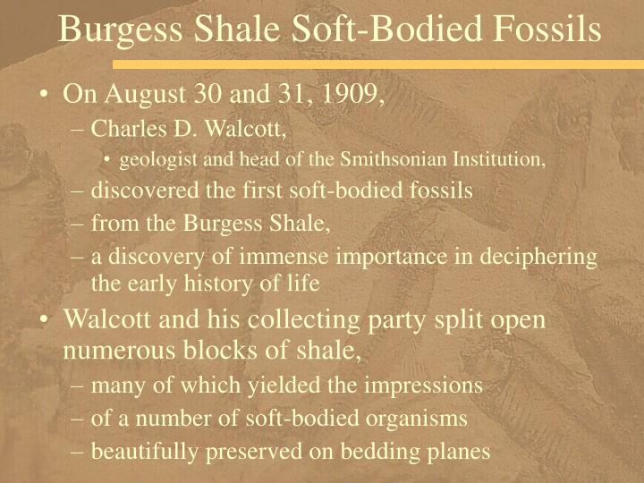 Burgess shale soft bodied fossils