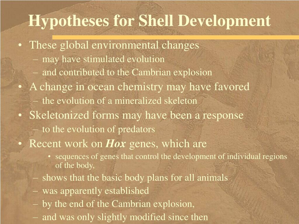 Hypotheses for Shell Development