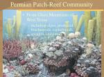 permian patch reef community