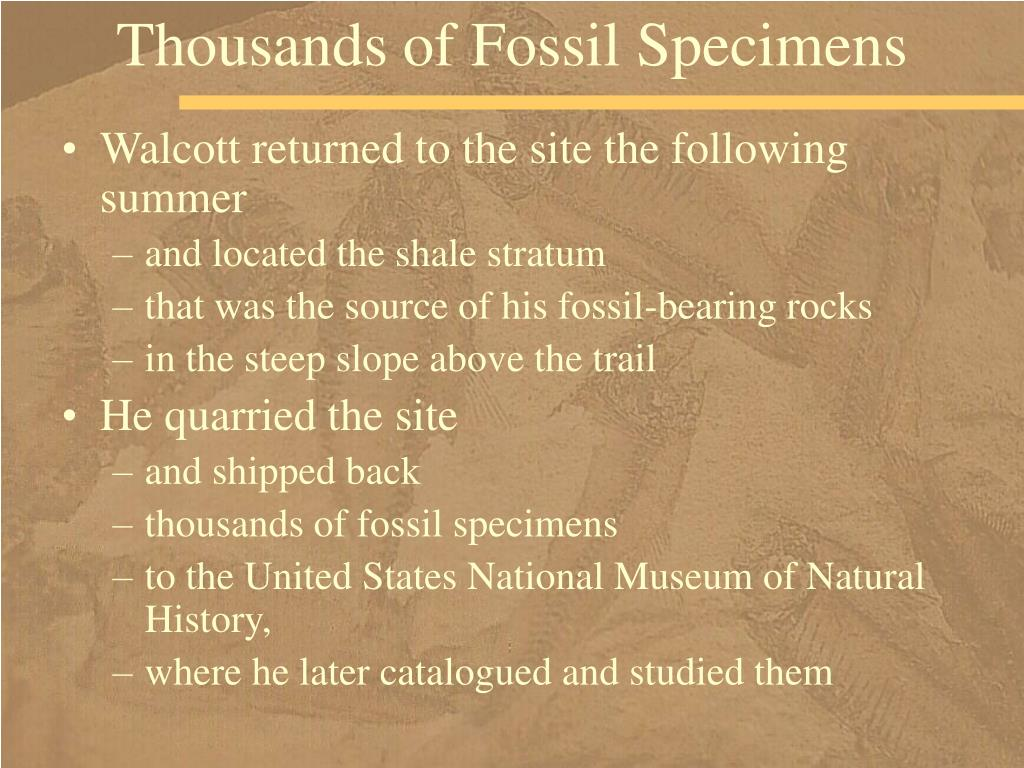 Thousands of Fossil Specimens