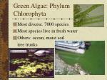 green algae phylum chlorophyta