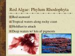 red algae phylum rhodophyta