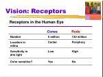 vision receptors