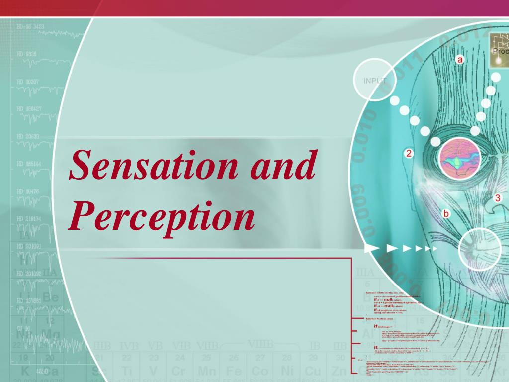 sensation and perception l.