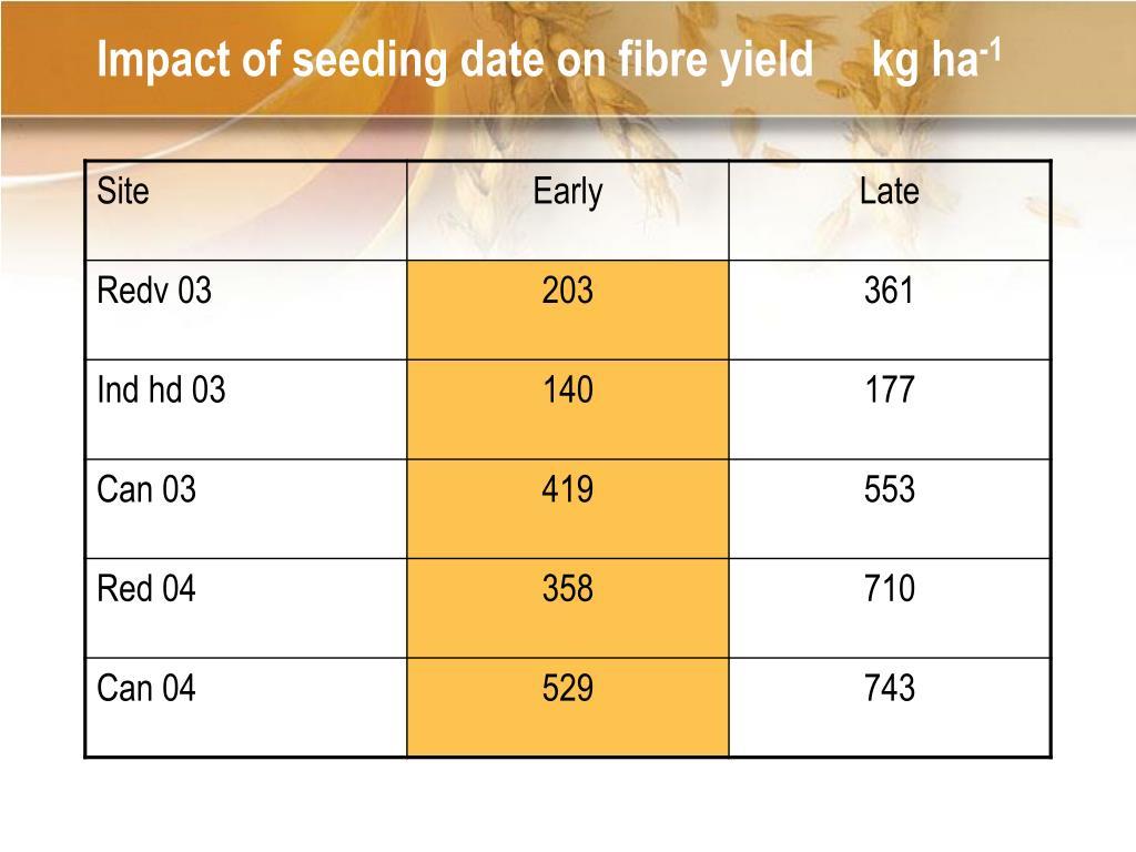 Impact of seeding date on fibre yield     kg ha