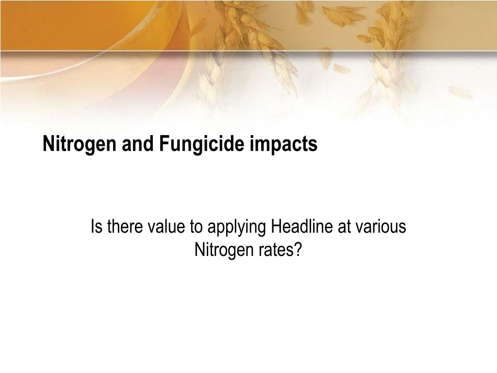 Nitrogen and Fungicide impacts