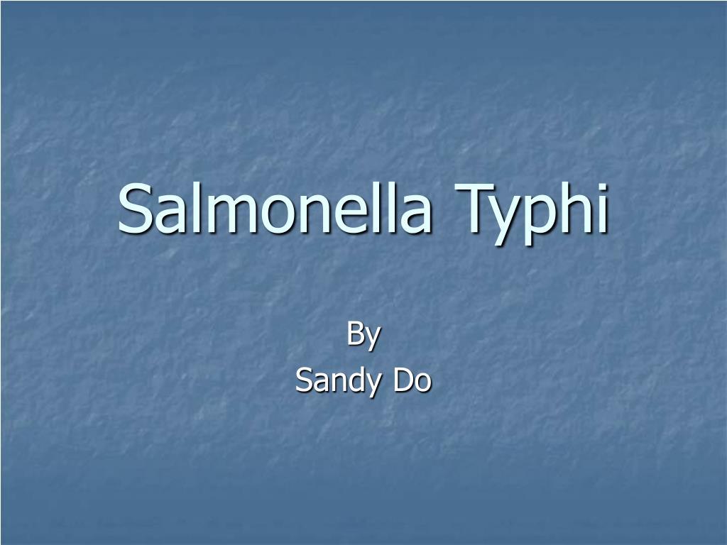 salmonella typhi l.