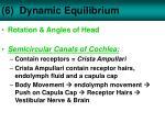 6 dynamic equilibrium