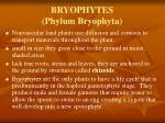 bryophytes phylum bryophyta