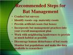 recommended steps for bat management