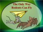the only way rodents can fly