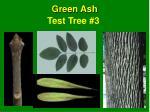 test tree 3