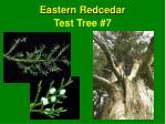test tree 7