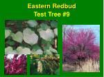 test tree 9