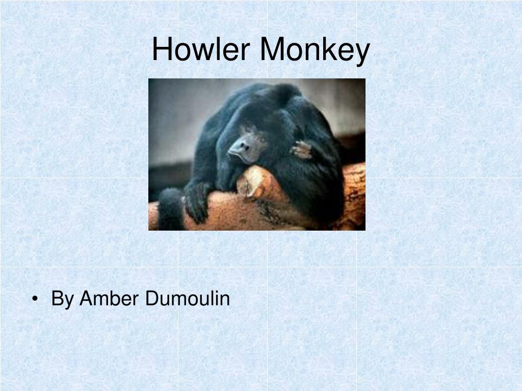 howler monkey l.