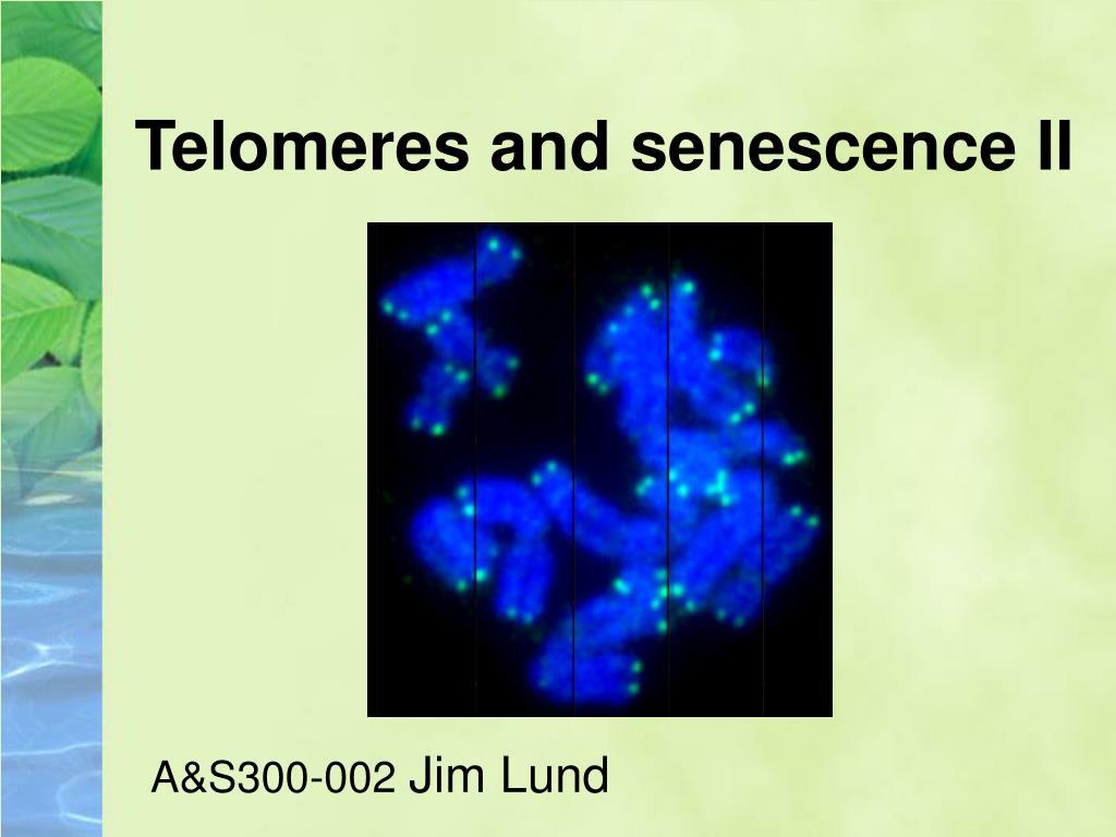 telomeres and senescence ii l.