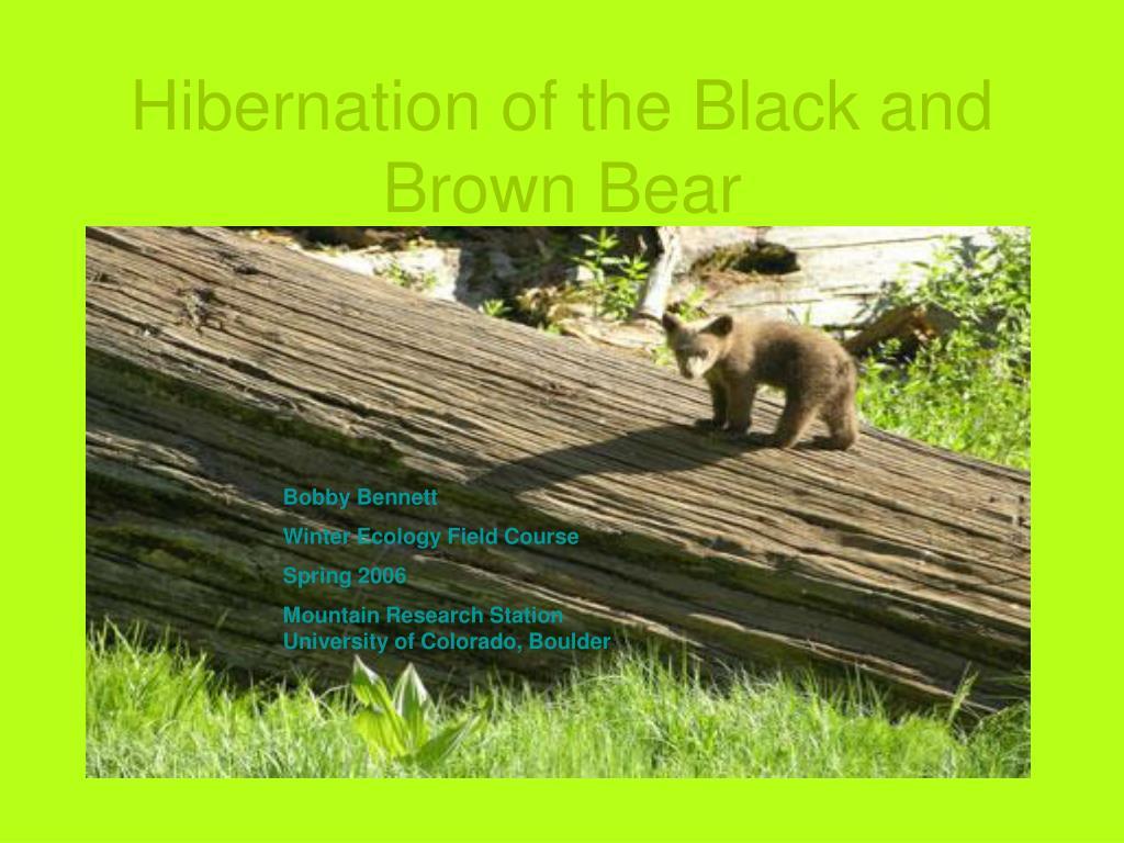 hibernation of the black and brown bear l.