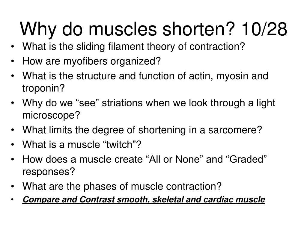why do muscles shorten 10 28 l.