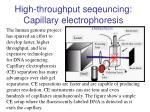 high throughput seqeuncing capillary electrophoresis