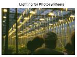 lighting for photosynthesis
