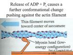 release of adp p i causes a further conformational change pushing against the actin filament