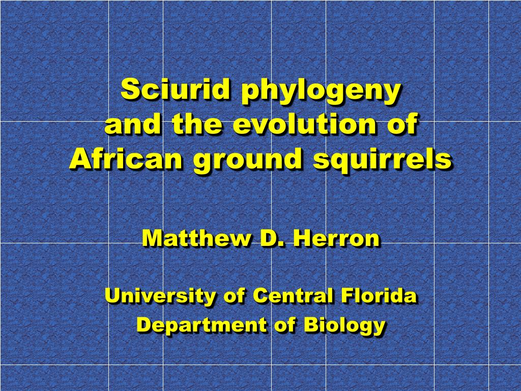 sciurid phylogeny and the evolution of african ground squirrels l.